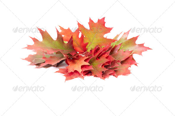 Really colorful leaves on a white. - Stock Photo - Images