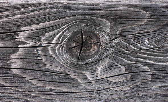 Wood knot - Stock Photo - Images