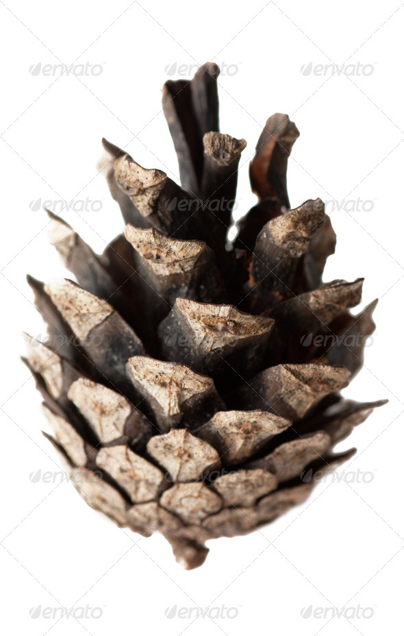 The cone - Stock Photo - Images