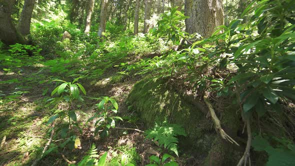 26e362983 Forest Floor by Pro-Stock | VideoHive
