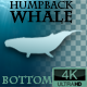 Humpback Whale Bottom View - VideoHive Item for Sale