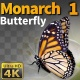 Butterfly Monarch 1 - VideoHive Item for Sale
