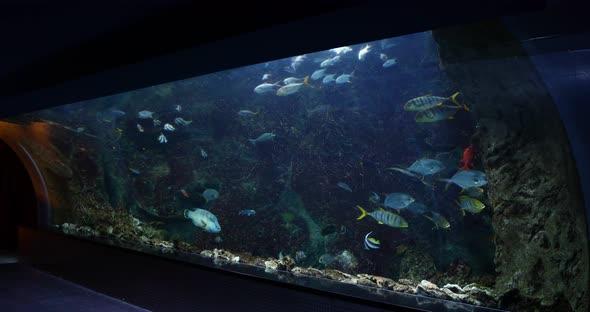 VideoHive Aquarium 8 20402091
