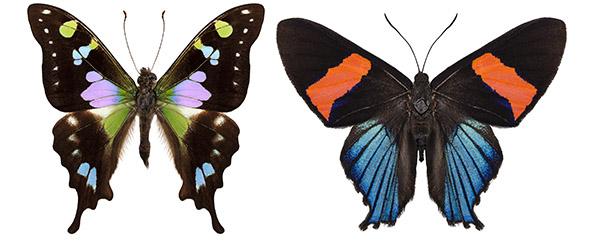 Two%20butterfliesi