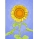 Sunflower and Blue Sky - GraphicRiver Item for Sale