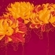 Romantic Vector Background with Chrysanthemum - GraphicRiver Item for Sale