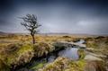 Winter on Dartmoor - PhotoDune Item for Sale
