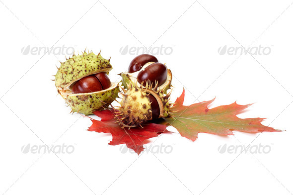 Autumn leaves and chestnuts on a white. - Stock Photo - Images