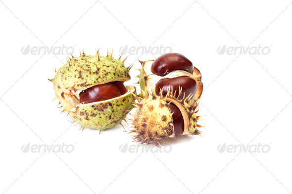 Opened chestnuts on a white. - Stock Photo - Images