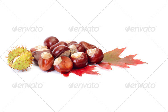Splendid chestnuts and leaf on a white. - Stock Photo - Images