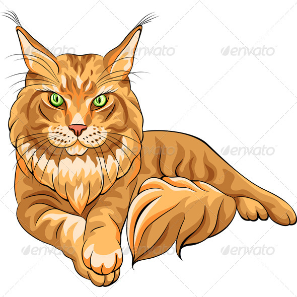Fluffy Maine Coon Cat  - Animals Characters