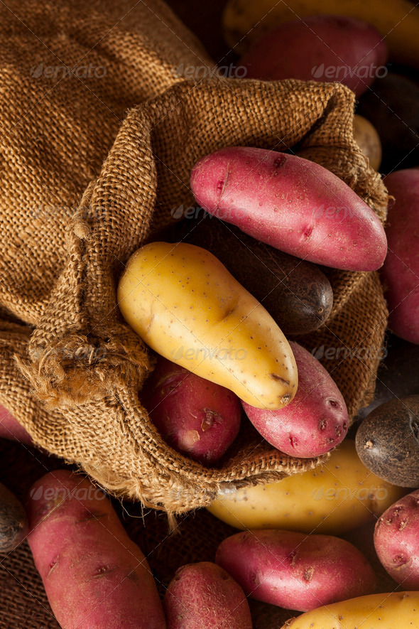raw organic fingerling potato medley - Stock Photo - Images