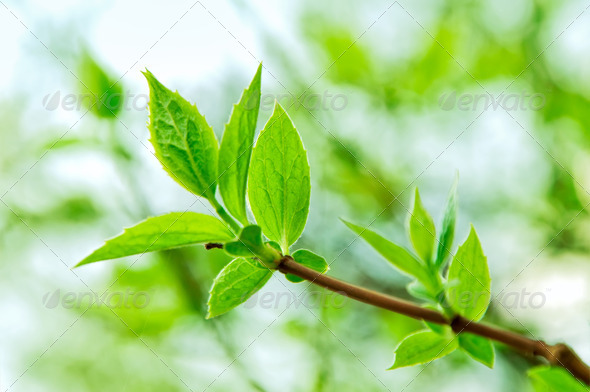 young leaves - Stock Photo - Images
