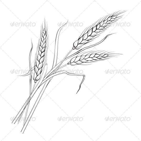 Drawing Lines In Keynote : Ears of wheat by kotkoa graphicriver