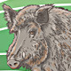 Boar Vector Illustration - GraphicRiver Item for Sale