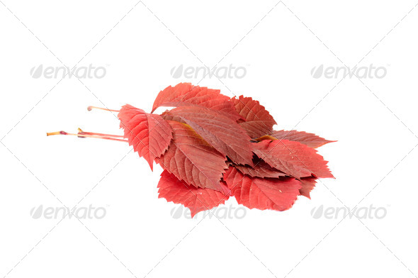 Fun autumn leaves on a white. - Stock Photo - Images