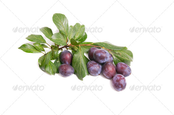Juicy,tasty plums on a white. - Stock Photo - Images