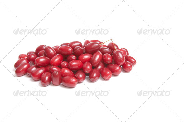 Fresh,juicy dogwoods on a white. - Stock Photo - Images