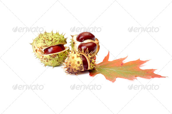 Nice autumn chestnuts and leaves on a white. - Stock Photo - Images
