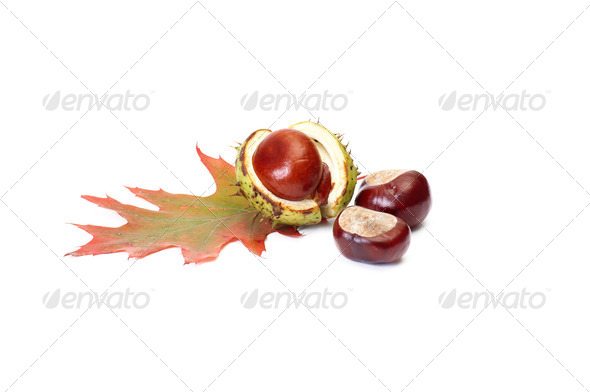 Chestnuts and oak leaf on a white. - Stock Photo - Images