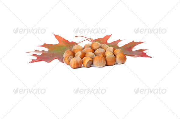 Several hazelnuts and colorful leaves on a white. - Stock Photo - Images