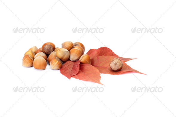 Wonderful ,autumn leaves and nuts on a white. - Stock Photo - Images