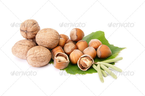 Wonderful view of hazelnuts and walnuts  with buds. - Stock Photo - Images