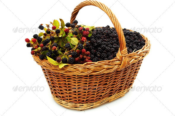 Basket of blackberries. - Stock Photo - Images