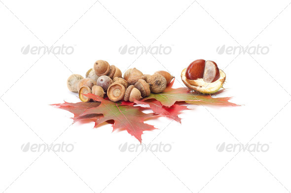 Fun acorns and leaves with chestnuts. - Stock Photo - Images