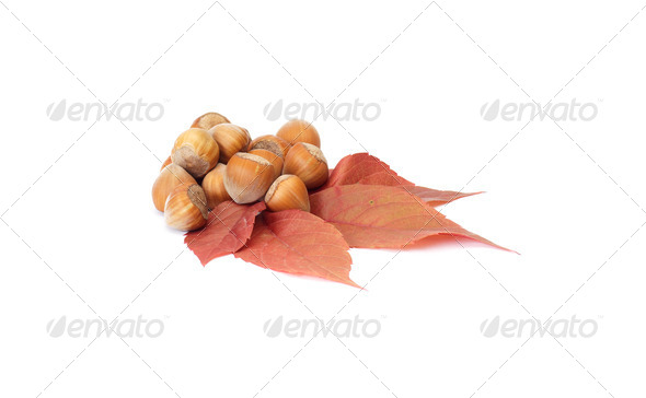 Colorful, autumn leaves and nuts on a white. - Stock Photo - Images