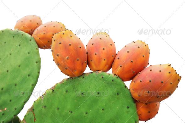 Prickly pear - Stock Photo - Images