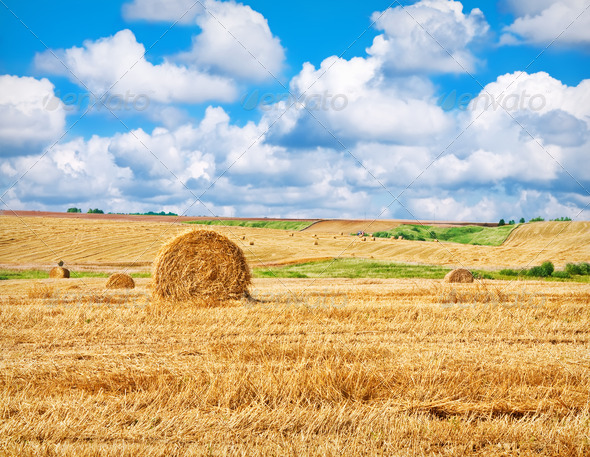 farm field - Stock Photo - Images