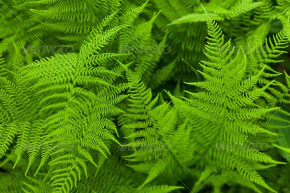 Fresh fern - Stock Photo - Images
