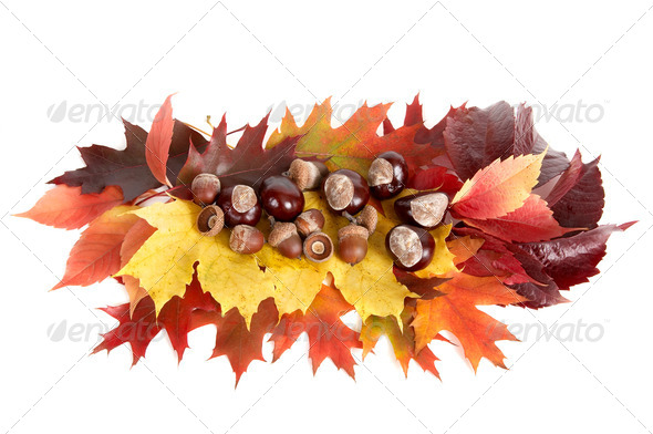 Autumn still life. - Stock Photo - Images