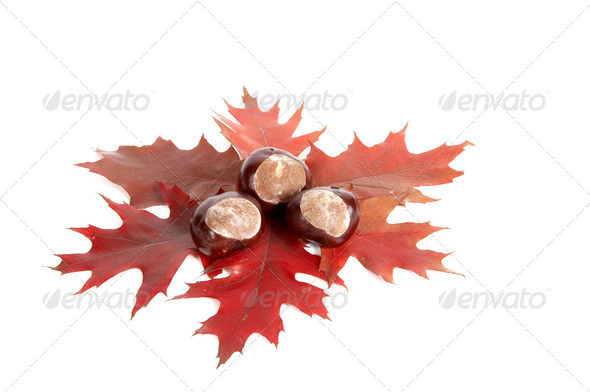 Three chestnuts and leaves. - Stock Photo - Images