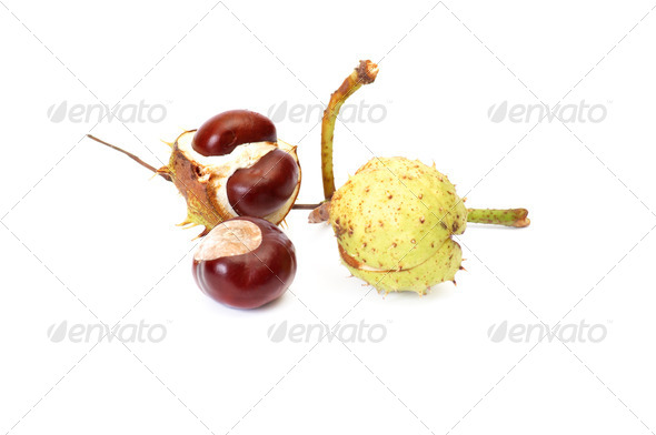 Fun ripe chestnuts on a white. - Stock Photo - Images