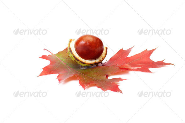 Perfectly nice chestnut and autumn leaves on a white. - Stock Photo - Images
