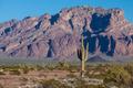 Arizona Cactus - PhotoDune Item for Sale