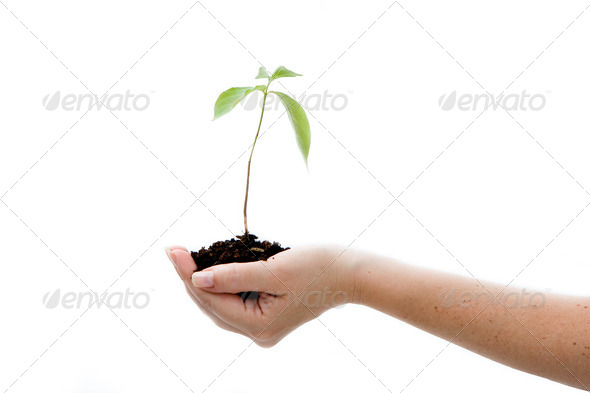 Plant in hand - Stock Photo - Images