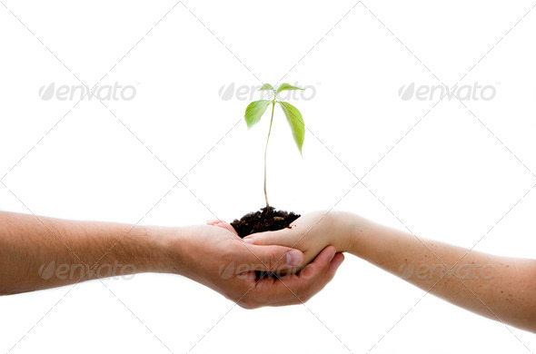 Plant in hands - Stock Photo - Images