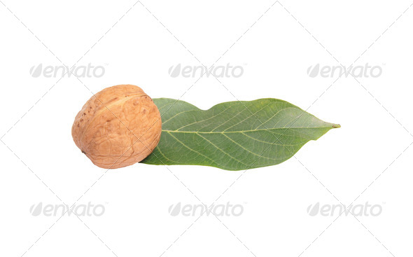 Nut and leaf on a white. - Stock Photo - Images