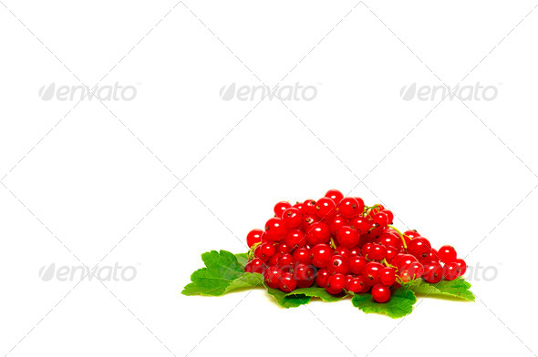 Fresh red currant on a white. - Stock Photo - Images