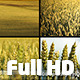 Wheat Field Pack 2 (4-pack) - VideoHive Item for Sale