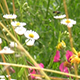 Wild Tall Colored Grass in the Wind - VideoHive Item for Sale