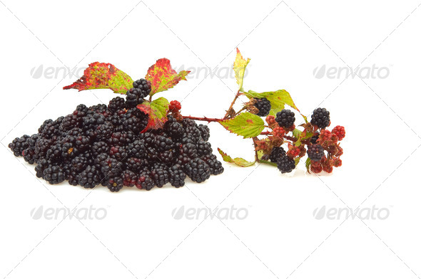Pile of blackberries. - Stock Photo - Images