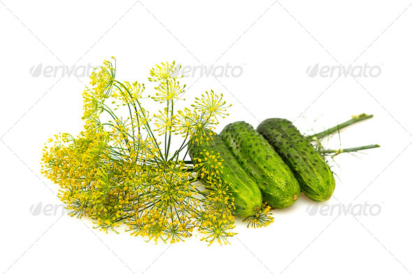Cucumbers and dill isolated on a whiteground. - Stock Photo - Images