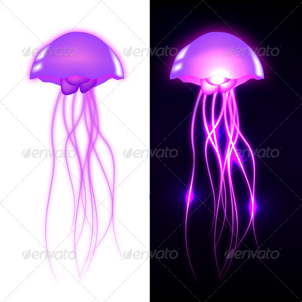 Vector Jellyfish - Animals Characters