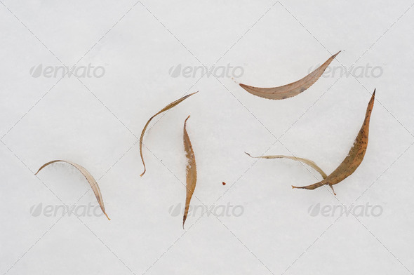 Leaves on Snow - Stock Photo - Images