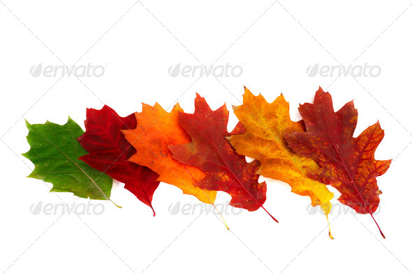 Splendid colorful leaves on a white. - Stock Photo - Images