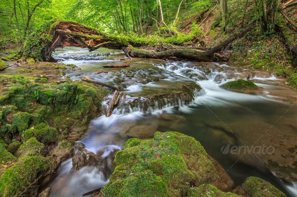 Beusnita stream - Stock Photo - Images